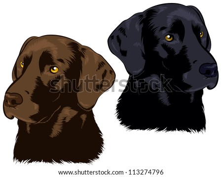 Chocolate and Black Labs - stock photo