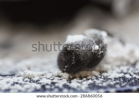 Chocolate chip covered in icing sugar on a dessert plate in shallow depth of field - stock photo