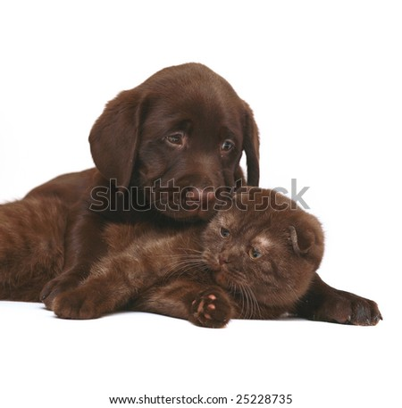 Chocolate kitten and chocolate pup.