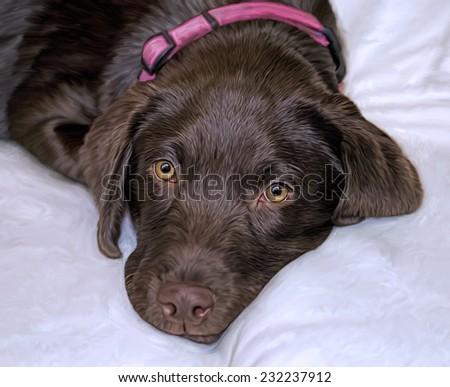 Chocolate Labrador Retriever- Innocence