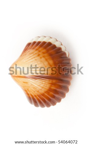 chocolate seashells on white background