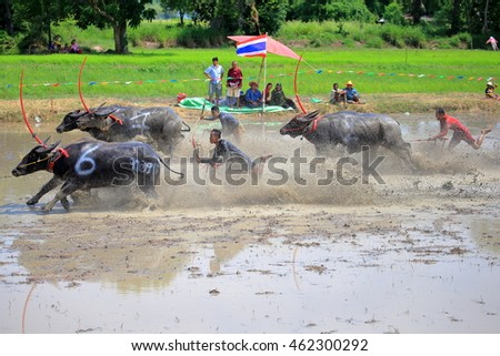 CHONBURI THAILAND - JULY 31 : Status of traditional buffalo race, which is held annually at Chonburi, Thailand. on July 31, 2016. Traditionally held by farmers to conserve water buffalos in Thailand.