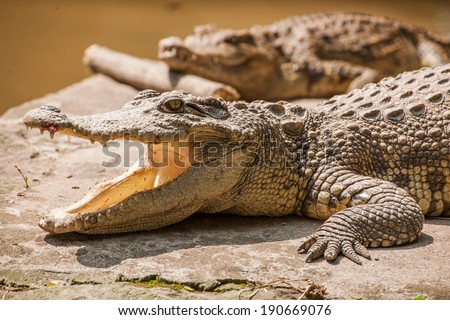 Chongqing crocodile crocodile pool center  - stock photo