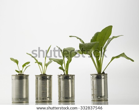 choy sum growth stage from the recycle aluminum can - stock photo