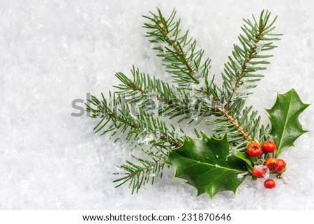 Christmas and New Year card with holly leaves and berries  - stock photo