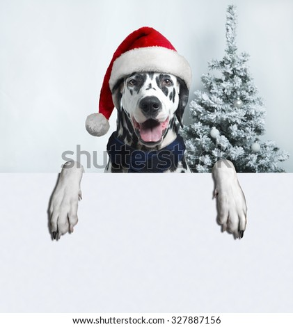 Christmas and New Year. Dalmatian Dog in Santa hats on a background of snow-covered trees. space for your business text ads. - stock photo