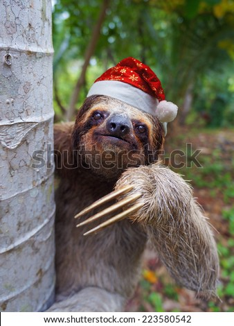 Christmas animal, portrait of a sloth wearing a santa hat - stock photo