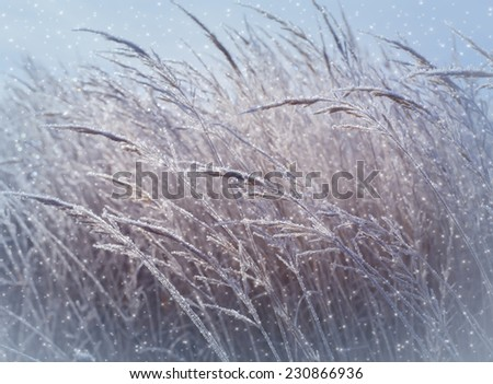 Christmas background dry grass in hoarfrost on a snowy field in winter - stock photo