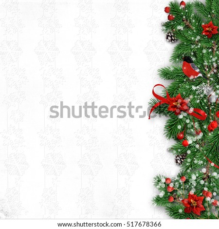 Christmas background with a border of fir branches, holly, poins