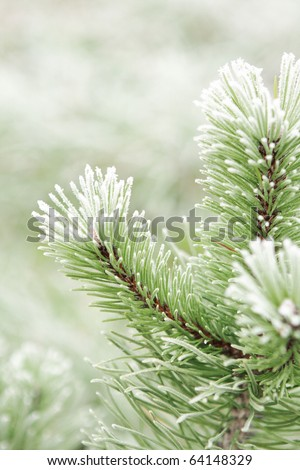 Christmas background with natural frost. - stock photo
