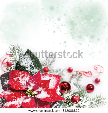 Christmas background with poinsettia, Christmas tree and baubles on snow, space for your text - stock photo