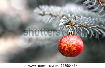 Christmas ball and blue Pine branches .