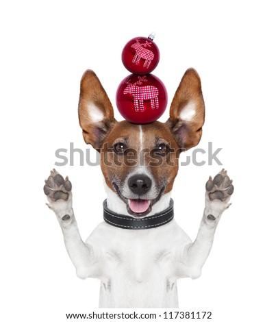 christmas balls dog paws and ears up - stock photo
