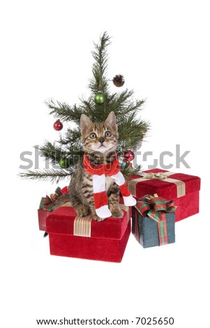 Christmas Bengal kitten wearing scarf under the tree with presents isolated on white background - stock photo