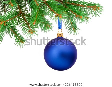 Christmas blue ball hanging on a fir tree branch Isolated on white background