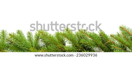 christmas border made from green branches over white - stock photo