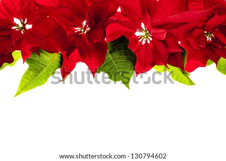 Christmas border of red poinsettia plants isolated on white background - stock photo