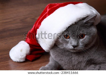 Christmas British gray cat with red and white santa hat on Holiday theme - stock photo