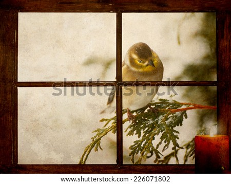 Christmas card background. A goldfinch in the snow peeks curiously into a tiny farmhouse window with a festive candle burning on the windowsill on Christmas morning, grunge textured. - stock photo