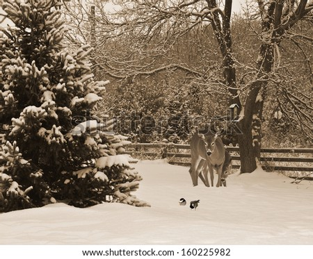 Christmas card design with a mother deer, and her baby, examining two cute chickadees in the snow, waiting to get to the bird feeder.. - stock photo
