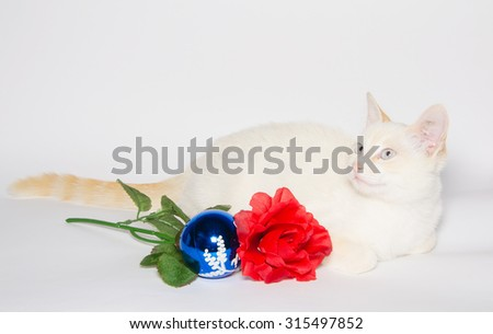 Christmas card with white kitten with christmas ball and red rose isolated on white background. - stock photo