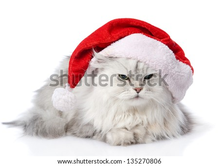 christmas cat in red Santa Claus cap isolated on a white background - stock photo