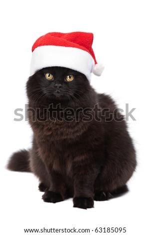 christmas cat isolated - stock photo