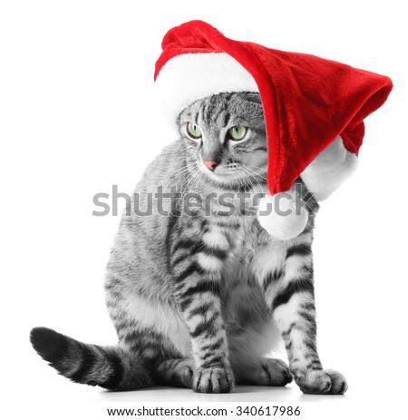 Christmas cat isolated on white - stock photo