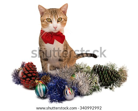 Christmas cat isolated on white background.Christmas cat - stock photo