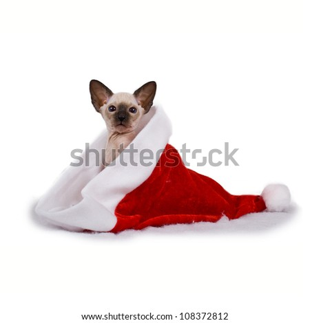 Christmas cat, kitten sitting in a Santa Claus haton a white background - stock photo