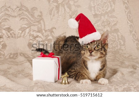 christmas cat wearing santa claus cap with a gift and bell