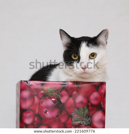 Christmas cat with gifts on white background - stock photo