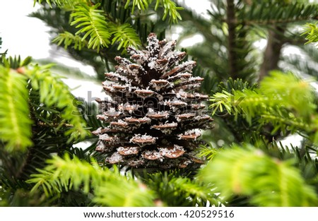christmas decoration close up of natural fir branch, pinecone - stock photo