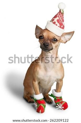 Christmas, Dog, Humor. - stock photo