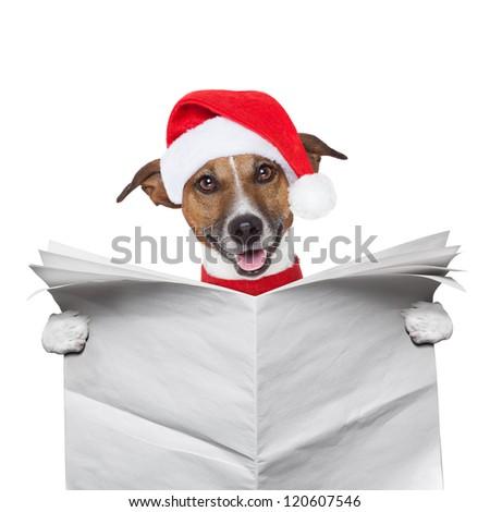 christmas dog reading a newspaper - stock photo