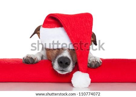 christmas dog santa baby red hat - stock photo