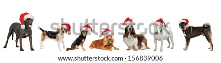 Christmas Dogs together, with Santa hat on the head, isolated on white background,