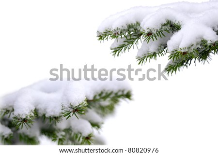 Christmas evergreen spruce tree with fresh snow on white - stock photo