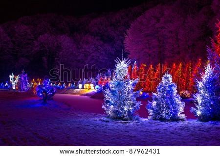 christmas fantasy - pine trees in x-mas lights, Cazma, Croatia - stock photo
