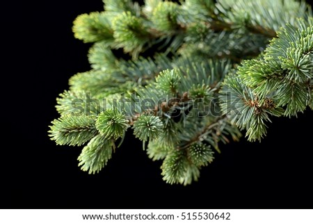 Christmas fir branch symbol on the black