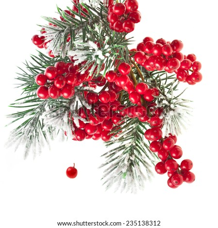 Christmas fir twig with red berries card with copy space isolated on white - stock photo