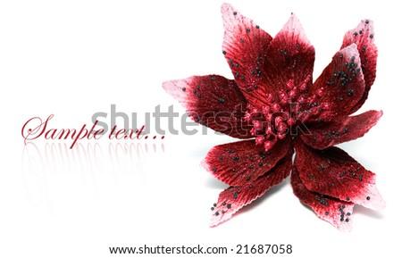 Christmas flower poinsettia isolated on white background - stock photo