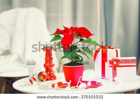 Christmas flower poinsettia on holiday interior - stock photo