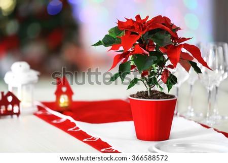 Christmas flower poinsettia on table, on lights background - stock photo