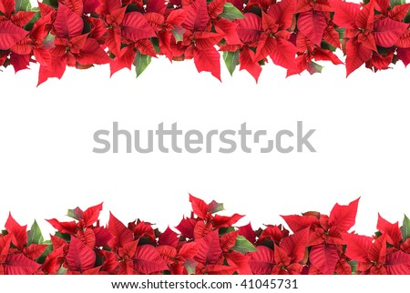 christmas frame from poinsettias isolated on white - stock photo