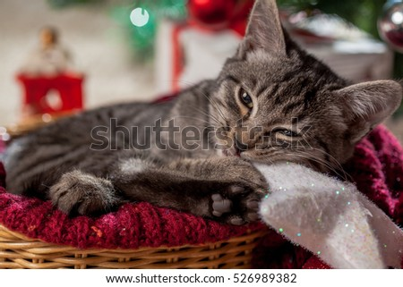 Christmas gifts and kitten under the tree