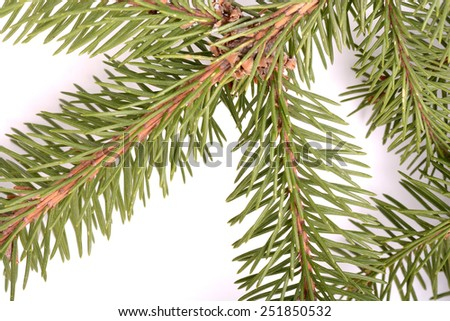 Christmas green eve tree branch framework isolated on white background