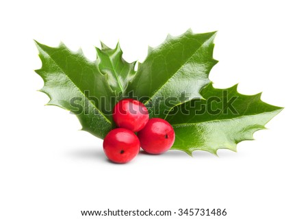 Christmas holly berry leaves decoration isolated on a white background. - stock photo