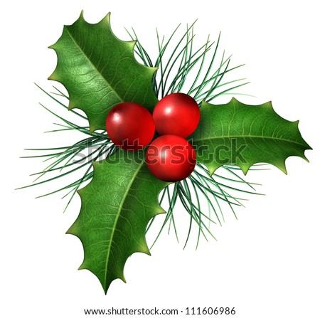 Christmas holly with with red berries and green leaves with  evergreen pine needles isolated on a white background as a winter holiday symbol and seasonal decoration. - stock photo