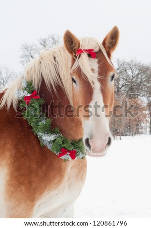 Christmas horse - a blond Belgian draft horse wearing a wreath and bow with snow falling - stock photo